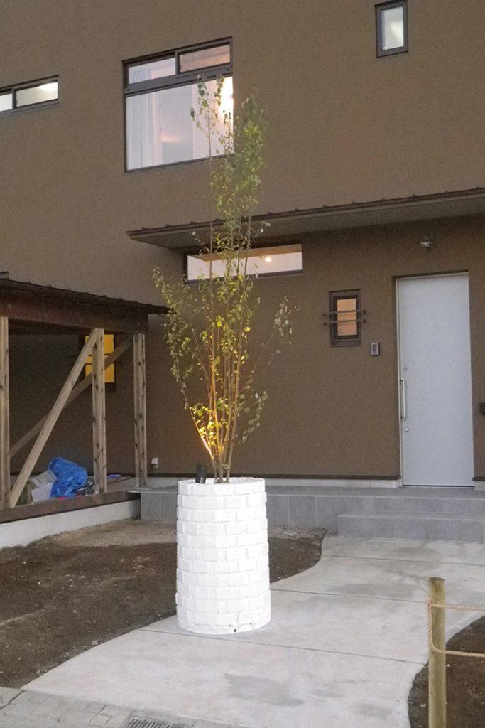 植栽 シンボルツリー